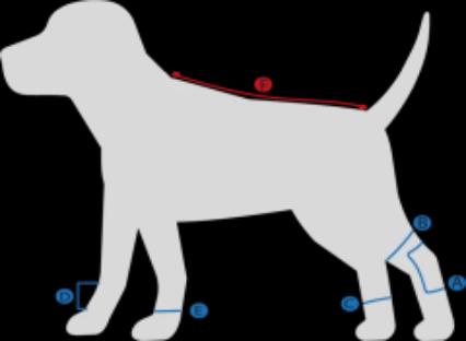 Guide des tailles pour chien